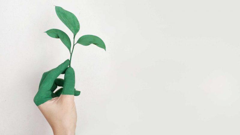5 Ways to Go Green Starting at Home